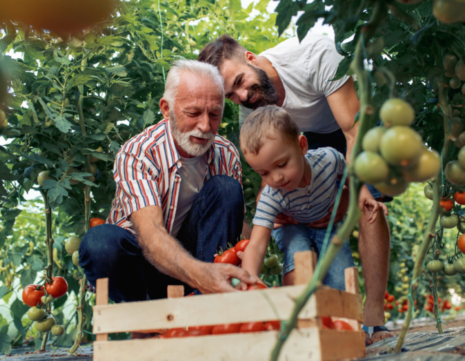 grandfatherson-and-grandson-working-in-greenhouse-picture-id990798752